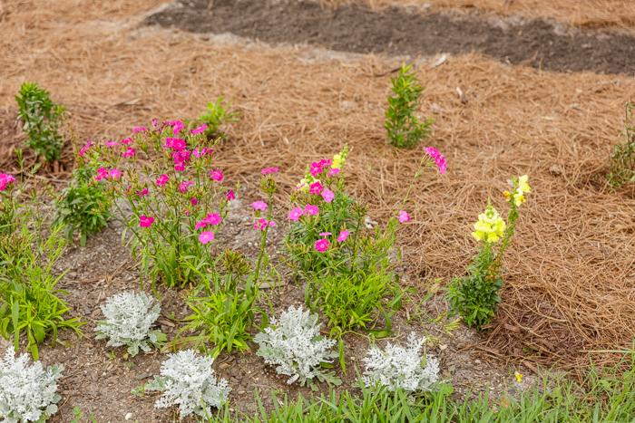 orlando photographers volunteering florida native plants_0020