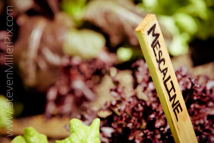 steven_miller_photography_east_end_market_audubon_park_garden_district_food_0029