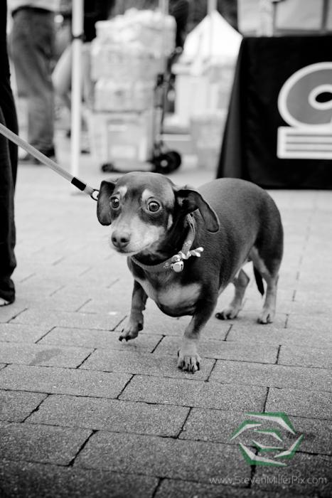 steven_miller_photography_jingle_bell_run_baldwin_park_events_photographers_0008